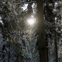 Сквозь ветки деревьев... :: sayany0567@bk.ru