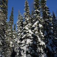 Зимний пейзаж :: sayany0567@bk.ru