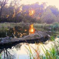 Закат на болоте. :: Михаил Шереметьев