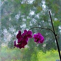 Плакало стекло дождем... :: Ольга Ламзина