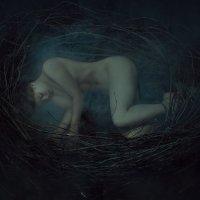 Nest :: Сергей Споялов