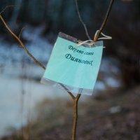 давайте сажать деревья! :: елена брюханова