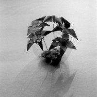 Бумажные цветы :: Сергей Тарабара