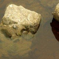 Речные камушки :: Валерий Талашов