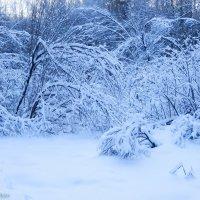 Лес под покрывалом :: Борис Панков