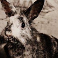 Rabbit :: Nastasia Rdkn