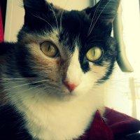 Кошка :: Наталия Ставрович