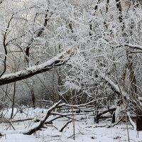 Прощай Зима! :: Николай Кондаков