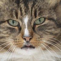 Бродячий кот :: MVMarina