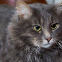 Коте... :: Vadim77755 Коркин