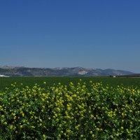 Израильская долина(эмек Израэль) :: Евгений Якубсон