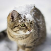 Снежная прогулка :: Павел Сухоребриков