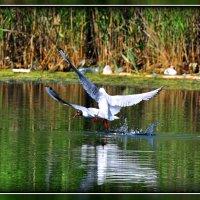 Танцы на воде :: Олег Порывай
