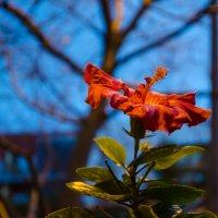 И снова аленький цветочек :: Alexey Bogatkin