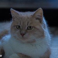 Мартовский кот :: Александр