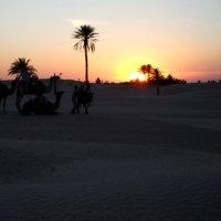 Закат в пустыне. :: Валентин Деев