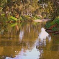 Река Яркон в парке Тель-Авив :: Владимир Сарычев
