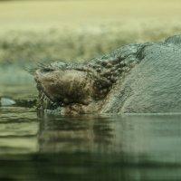 отгадайте, кто показался из воды... :: MVMarina