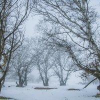 Туман :: Владимир Богославцев(ua6hvk)