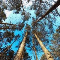 В лесу :: Максим Галимов