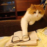 Вы таки думаете, что очки исравят резкость кадра? :: Владимир Гилясев