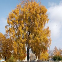 осень :: владимир ковалев