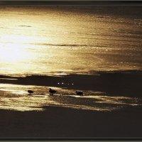 Бронзовый закат :: лиана алексеева
