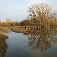 Разливалась весной полая вода ... :: Владимир Горбунов