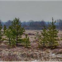 февраль на болоте :: Ирэна Мазакина