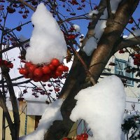 зимний букет :: Евгений Фролов