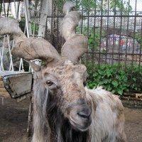 Обитатель московского зоопарка. :: ФотоЛюбка *