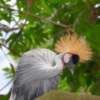 Краски Бали :: Дмитрий Боргер