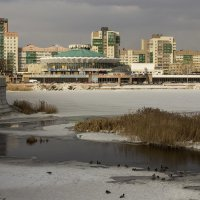 Утиная колония :: Александр Ширяев