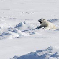 В Арктике , 82-я! :: Олег Вайднер