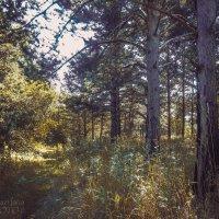 Дивный лес :: Yana Fizazi