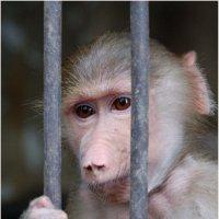 Сижу за решёткой... *** I sit behind bars ... :: Александр Борисов
