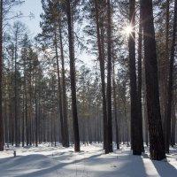 свежий снег в марте :: Дамир Белоколенко