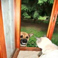 Собачья дружба. :: Нина