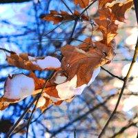 Листья и снег :: Олег Петрикеев