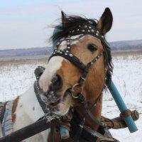 Лошадь Мэри :: Александр Чулков