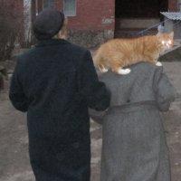 Ацкий кот... :: Sergey Serebrykov