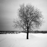 одиночество... :: Андрей Белокопытов