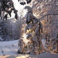 Зима :: Ольга Селезенева