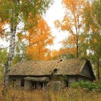 Осенняя сказка :: Ольга Селезенева