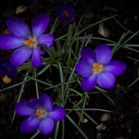 Spring. Весна. :: Aleksandr Papkov