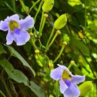 Орхидеи тропического леса :: Дмитрий Боргер