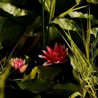 Краски природы :: Михаил Новиков