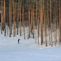 Лыжня в лесу. :: Олег Афанасьевич Сергеев