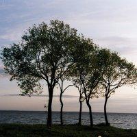 Финский залив :: Сергей Карцев