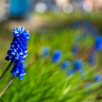 Весенние цветы :: Игорь Машкин